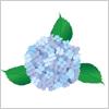 雨にこそ映える、紫陽花 あじさい イラレ/ベクトルデータ【無料配布】