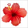 夏の花といえばハイビスカス