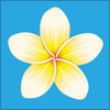 南国の白い花といえばプルメリア