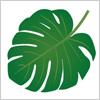 ジャングルや南国の植物モンステラ(Monstera)の葉のイラストです