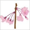 枝垂桜のイラスト epsパス無料配布データ