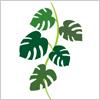 モンステラの葉のイラスト素材