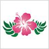 ピンク色のハイビスカスのイラスト素材