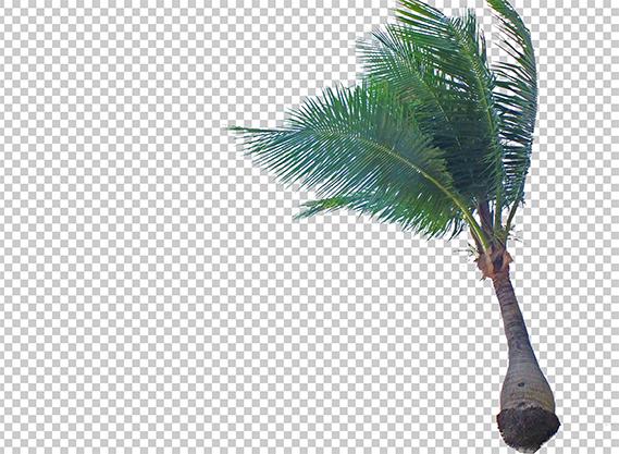 ヤシの木の切り抜きデータ