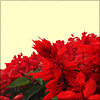 赤い花の切り抜きデータ
