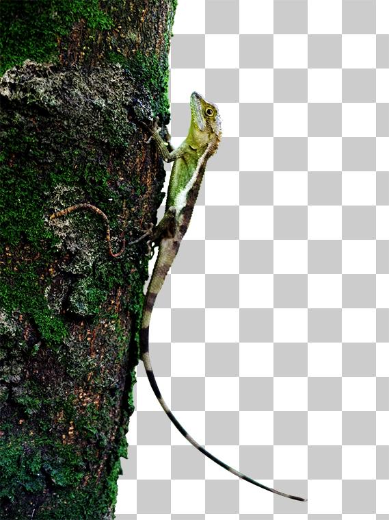 樹木ととかげの切り抜き画像