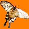 白いアゲハ蝶の切り抜き画像