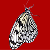横から見た白いアゲハチョウの切り抜き画像