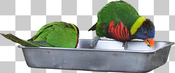 カラフルな鳥の切り抜き画像