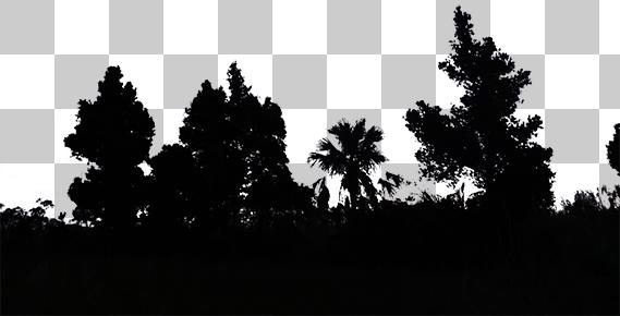 木々の切り抜き画像