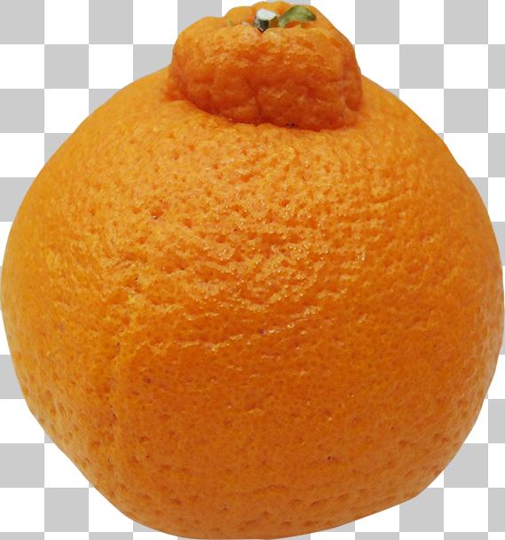 オレンジの切り抜き画像