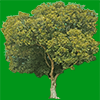 樹木の切り抜き画像