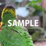 カラフルな鳥のバックショット