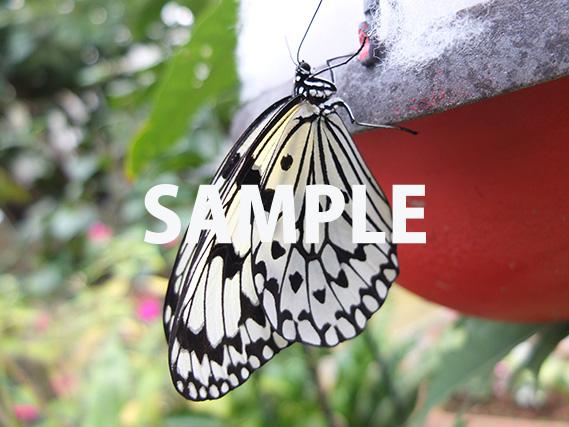 蝶の接写画像