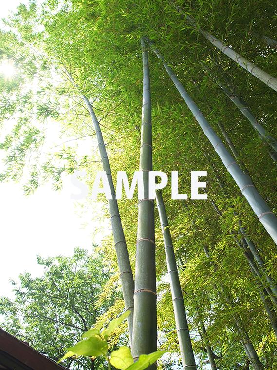 天へと真っ直ぐ伸びる竹
