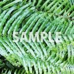 緑々しいシダ系の葉