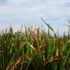 生い茂る草と空