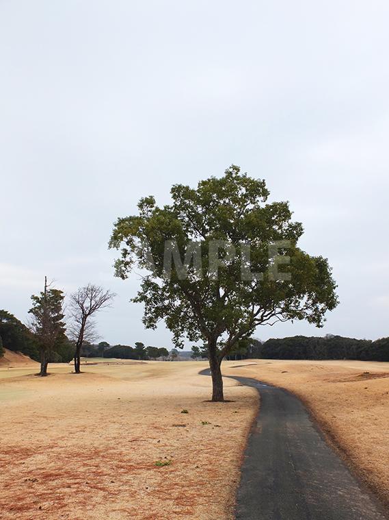 カート道の側の樹木