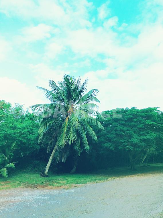 レトロな風合いに加工したヤシの木と青い空