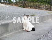 縁石を利用して寝る猫