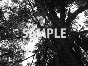 躍動感のある樹木