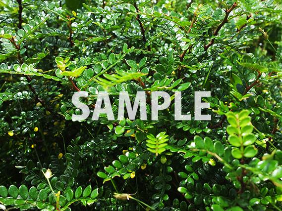 緑々しい葉っぱの写真
