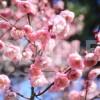 ぷっくりと花開く楠玉(くすだま)
