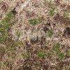 冬の枯れた芝