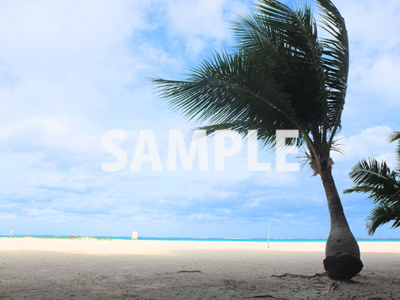 ヤシの木と砂浜の写真