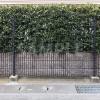目隠しにもなる草木の壁