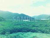 マングローブ原生林写真