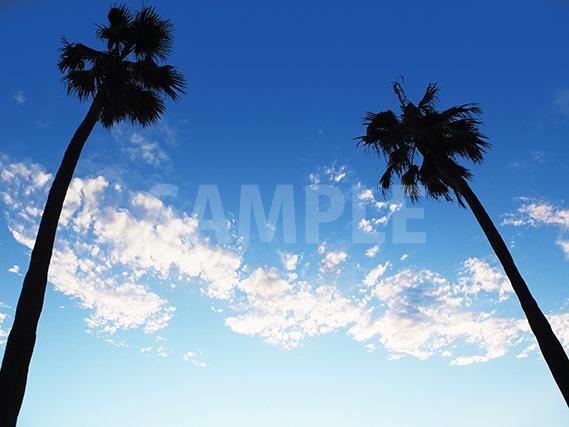 青い空にのびるヤシの木の写真、フリー素材