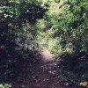 草木が鬱蒼と生い茂った林道の写真
