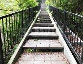 緑に囲まれた階段の写真