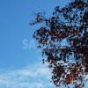 青空と色づいた紅葉のフリー写真