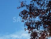 青空と色づいた紅葉のフリー写真素材