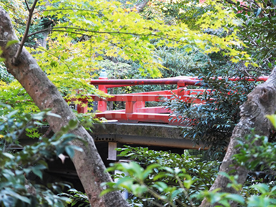 生い茂る緑の隙間から覗く、鶴岡八幡宮の赤い橋