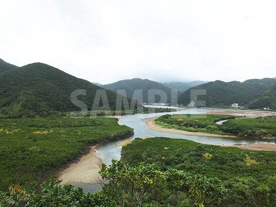 奄美大島にあるマングローブ原生林