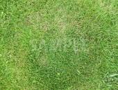 緑々しい芝生のテクスチャー