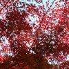 色づいた紅葉
