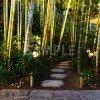 ライトアップされた竹