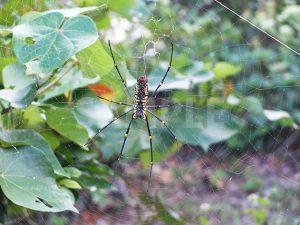 足の長い大きな蜘蛛