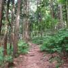 林道の写真・フォト