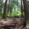 木の根が階段のようになっている林道
