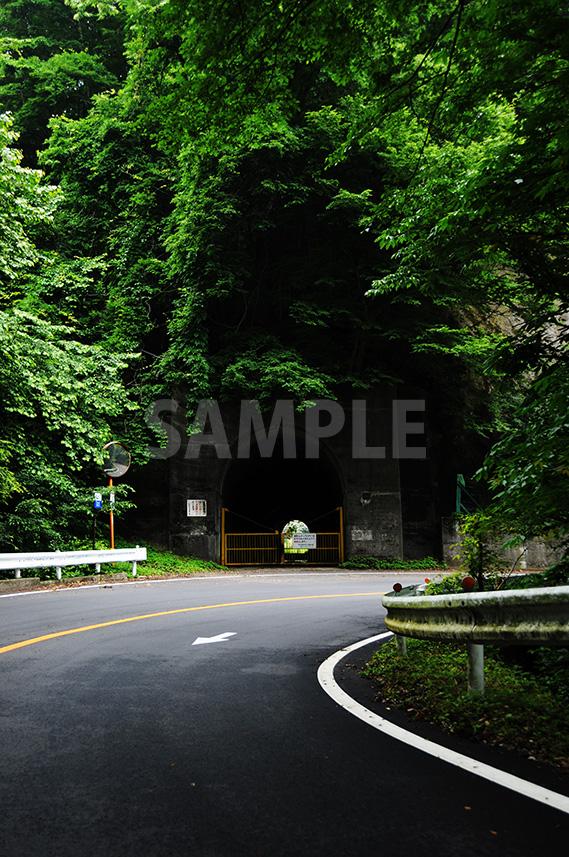 カーブした舗装道路と鬱蒼と生い茂る緑