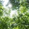眩しい木漏れ日