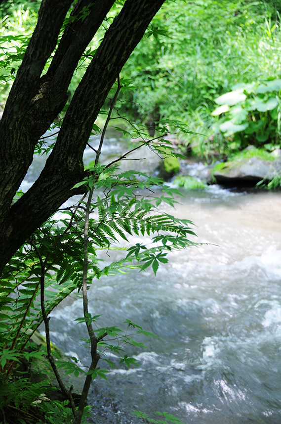 川沿いの樹木