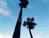 空に伸びる2本のヤシの木