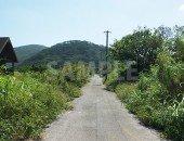 緑が生い茂る田舎道