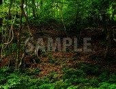少し不気味な林